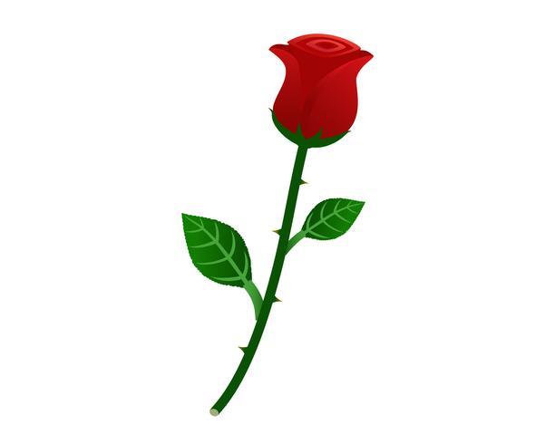Ilustração em vetor de linda rosa vermelha, isolada no fundo branco