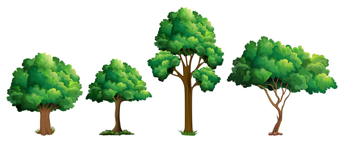 Set di design diverso albero vettore