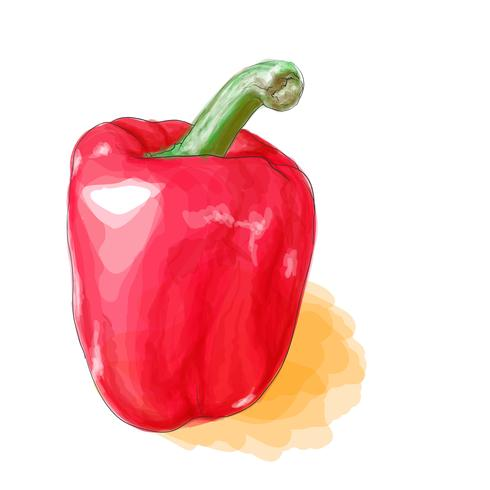 Sweet peppers vector with watercolor style.