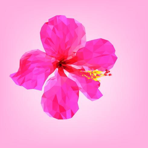 Poligono di fiore di ibisco rosa.