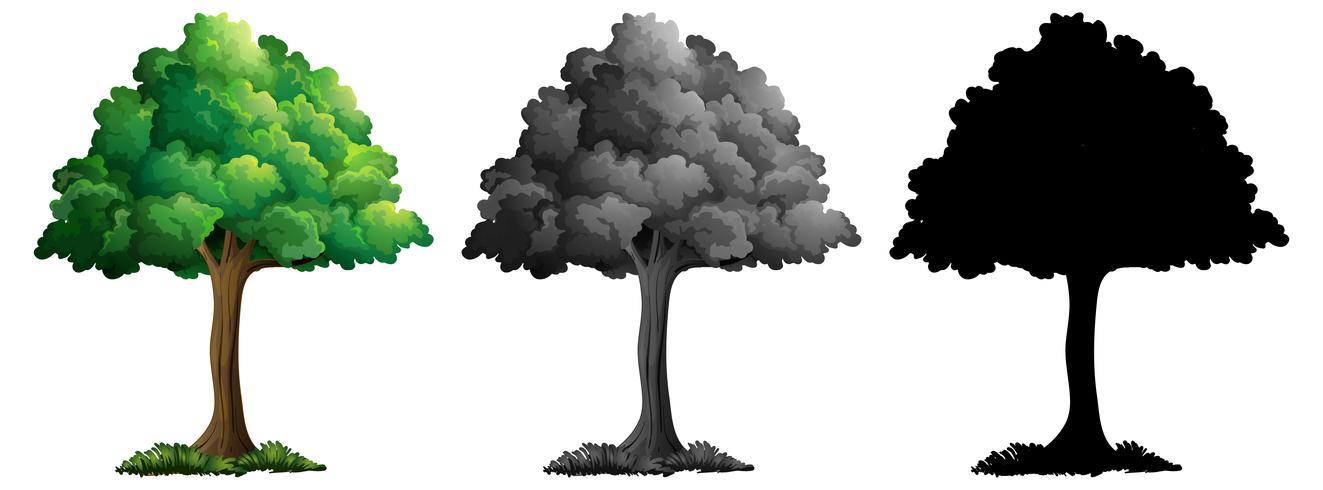 Conjunto de arbol aislado vector