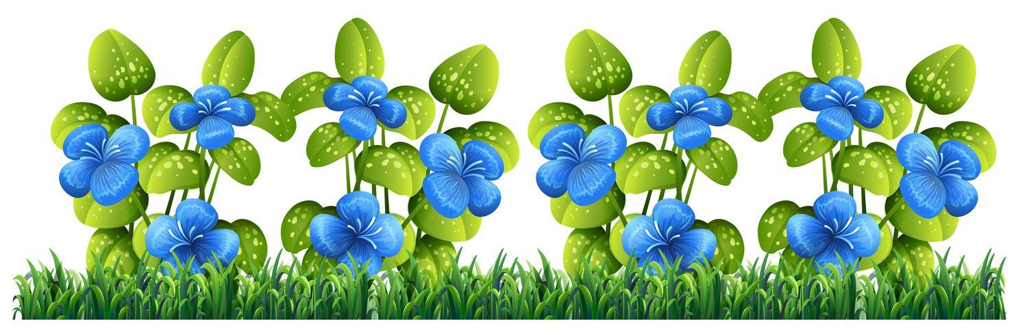 Fleur bleue isolée pour la décoration