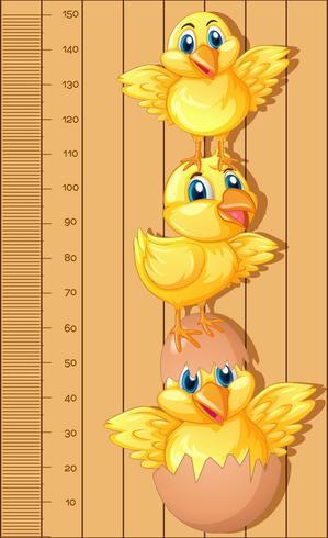 Regla de cuadro de crecimiento con pollitos vector