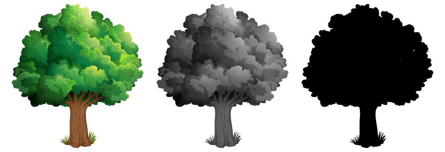 Conjunto de diseño de árbol vector