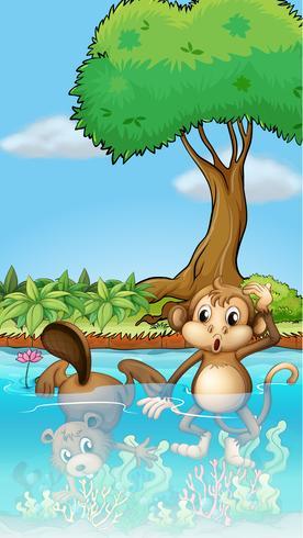 Un mono y un castor en el estanque.