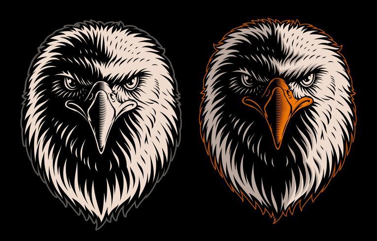 Vetorial, ilustração, de, cabeça branca, águia vetor