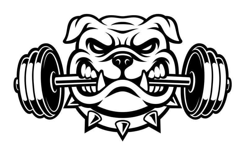 Zwart-wit afbeelding van een bulldog met halter