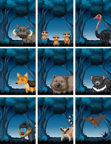 Set di animali in natura