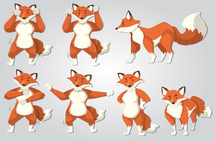 Conjunto de dança de raposa