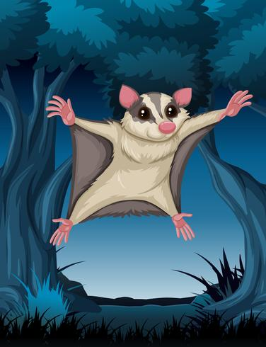 Flying possum in woods