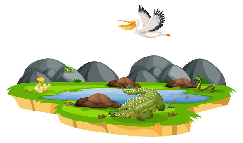 Vilddjur i naturen