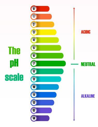 The ph scale diagram vector