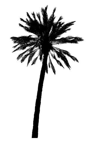 silueta de palmeras ilustración vectorial realista vector
