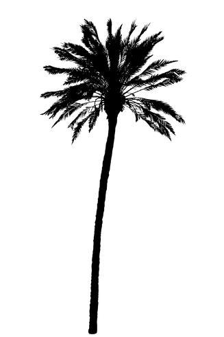 silhouette de palmiers arbres illustration vectorielle réaliste