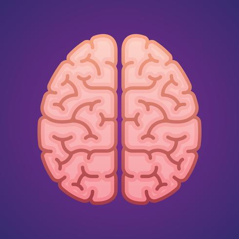 Cervello di emisferi nell'illustrazione piana dell'illustrazione dell'icona di vista superiore