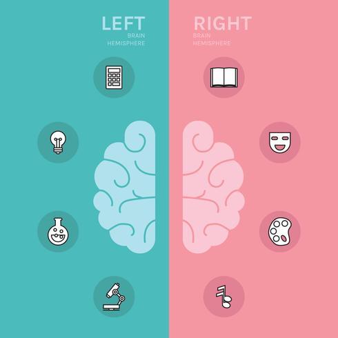 Hémisphères cérébraux gauche et droit