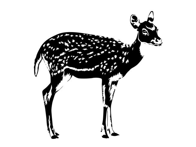 spotted deer silhouette in black and white
