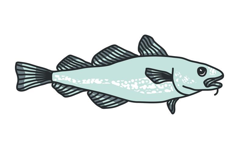 Illustrazione di merluzzo