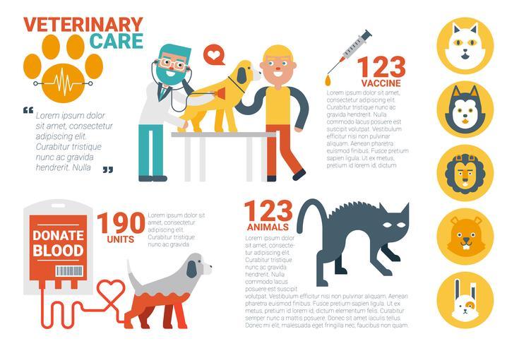 Infográfico de cuidados veterinários vetor