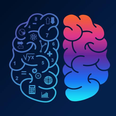 human hjärnhalvfrekvensvektor