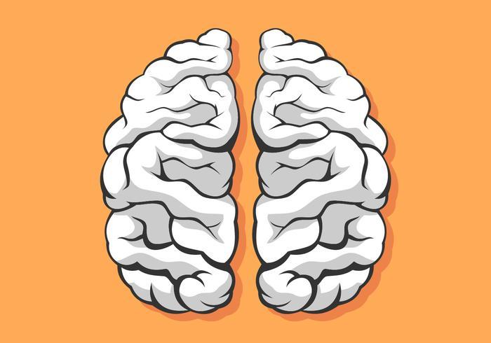 Mensch Brain Hemispheres-Schwarzweiss-Vektor