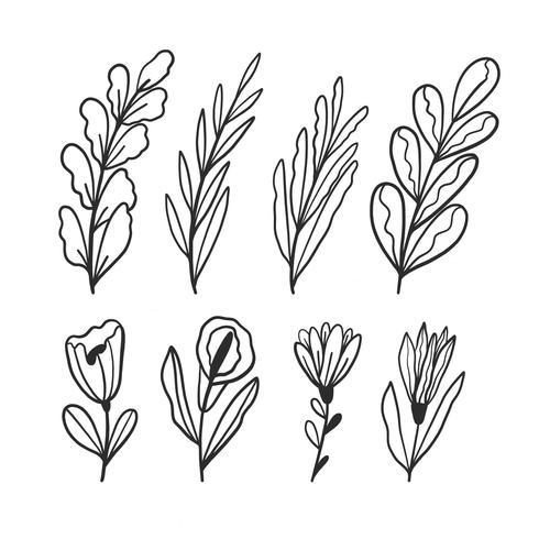 Folhas de mão desenhada e coleção de flores vetor