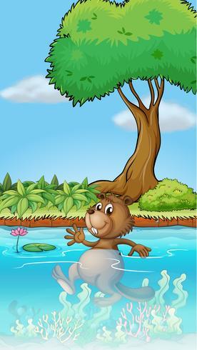 Un castoro nuotatore