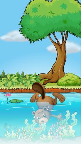 Un castor buceando bajo el agua.