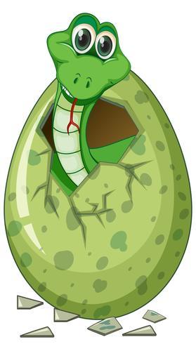 Green snake hatching egg