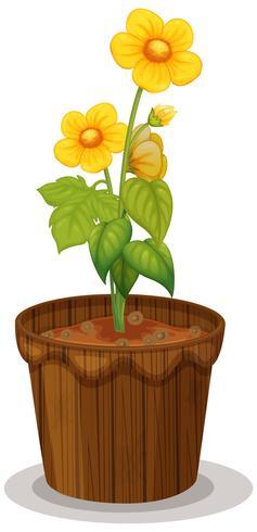 Gelbe Butterblumeblumen im Blumentopf