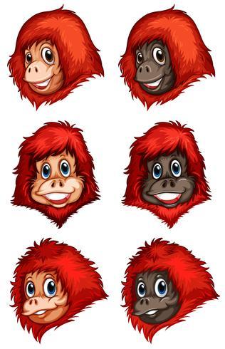 Köpfe von Schimpansen