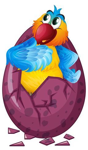 Uovo da cova uccello Macaw