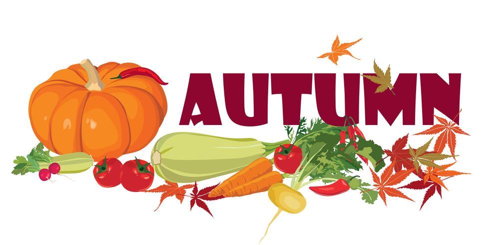 Plantaardig label. Gezond eten. Herfst oogst banner. vector