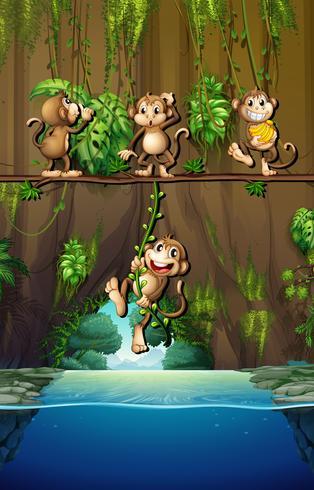 Szene mit Affen und Fluss