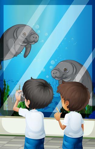 Studenten kijken naar zeekoeien van fishtank