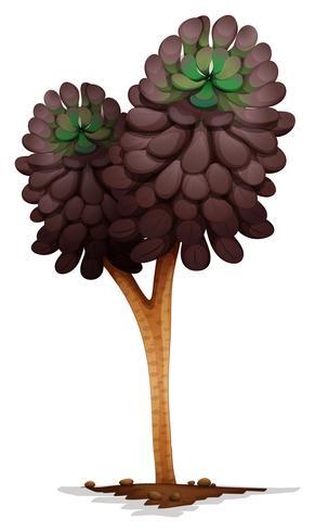 Una pianta di aeonium voodoo