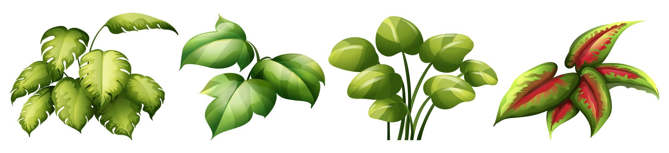 Set van bladplant