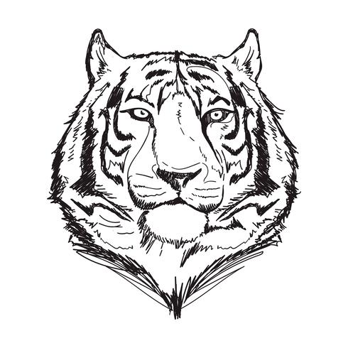 tiger linje konst vektor illustration