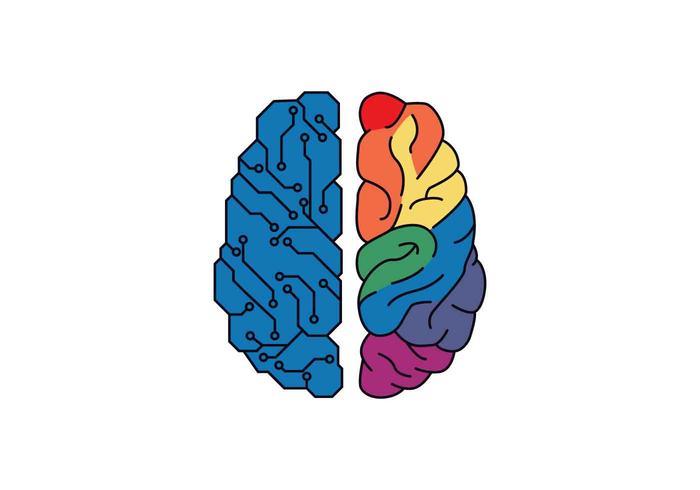 Ilustración de Vector de hemisferios de cerebro humano