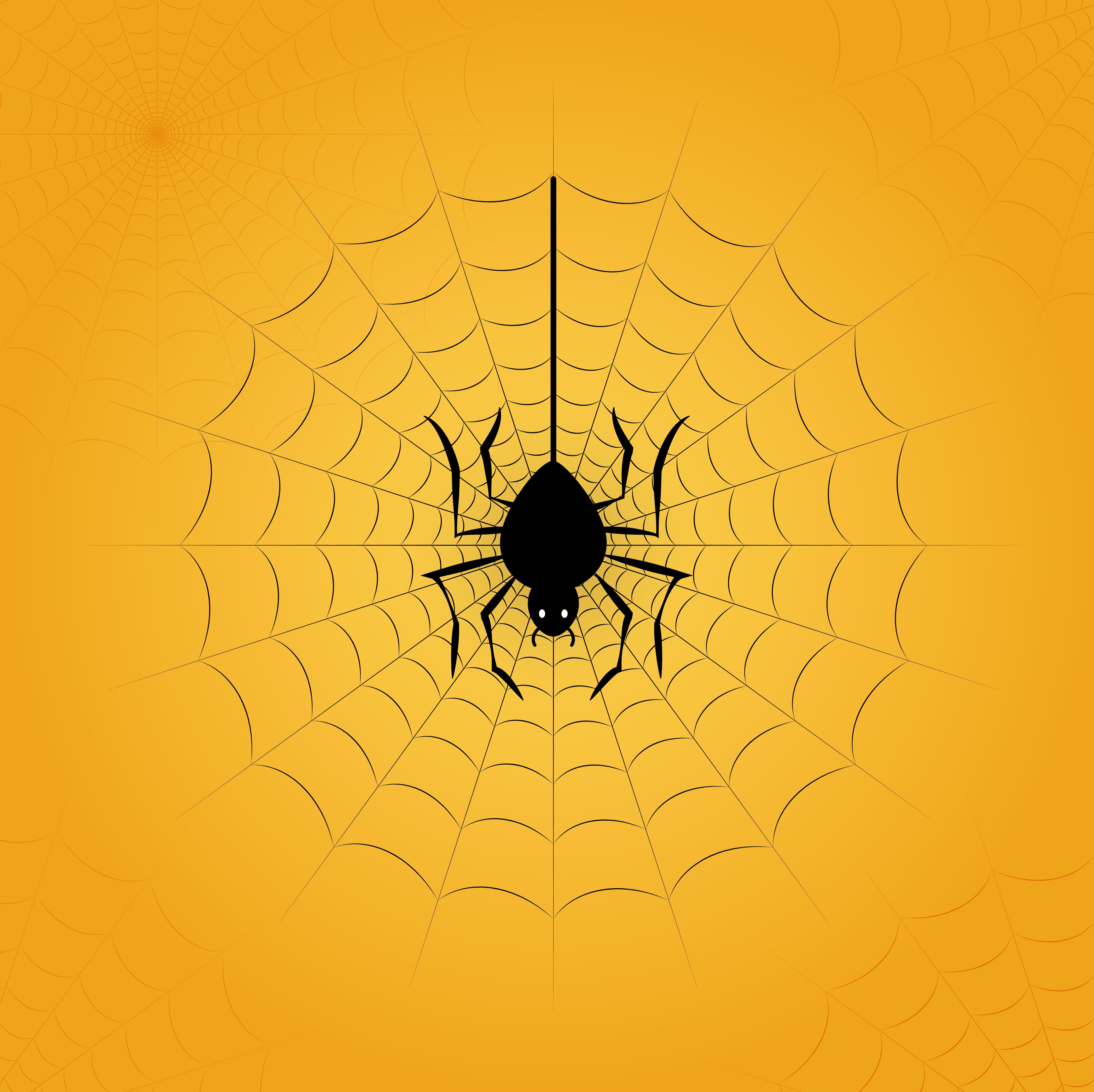 蜘蛛網圖 免費下載 | 天天瘋後製