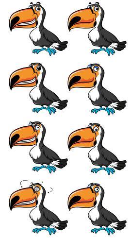 Toucan fågel med olika känslor
