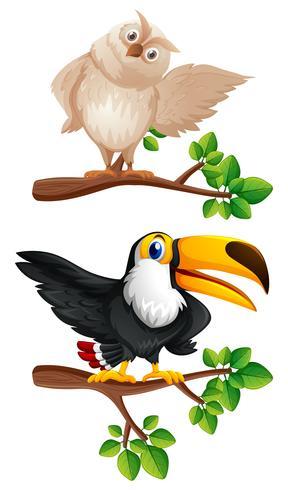 Eulen- und Tukanvögel auf den Zweigen