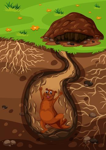 Une loutre heureuse dans le trou