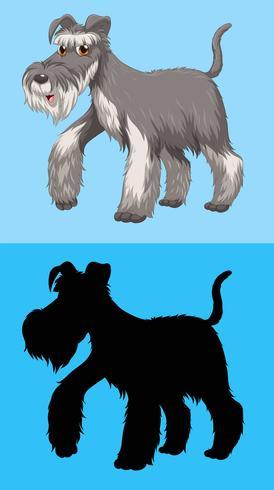 Terrierhund mit grauem Pelz