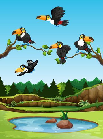 Toucan bird in nature
