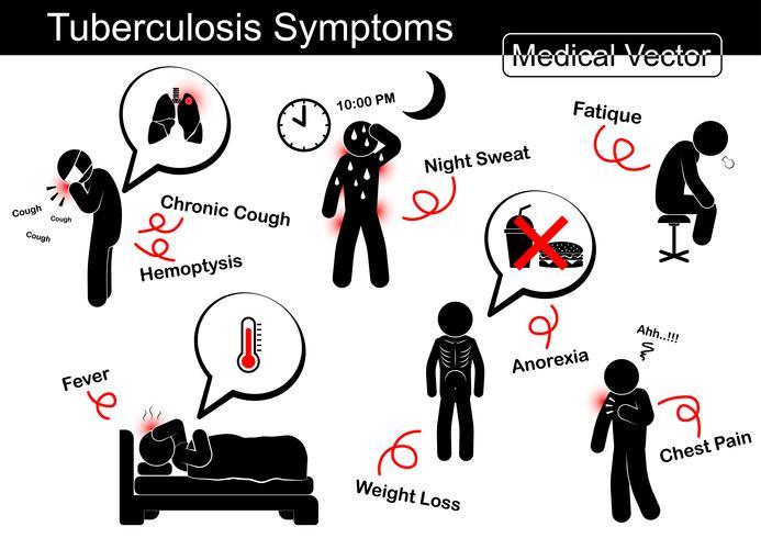 Síntomas de la tuberculosis (tos crónica, hemoptisis, sudor nocturno, fatiga, fiebre, pérdida de peso, anorexia, dolor de pecho, etc.) vector