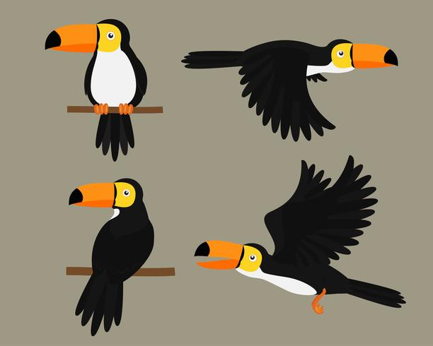 Set of Toucans bird character cartoon - Vector illustration