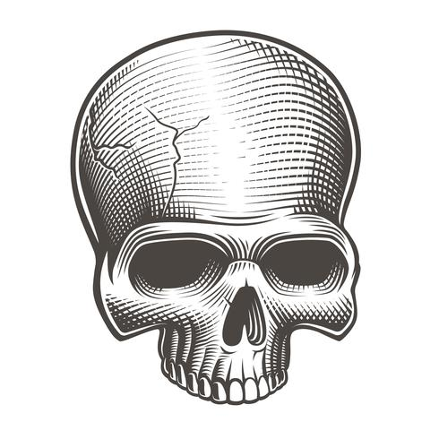 Vectorillustratie van een deel van de schedel