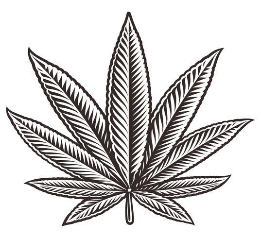 Vetorial, ilustração, de, um, cannabis, folha