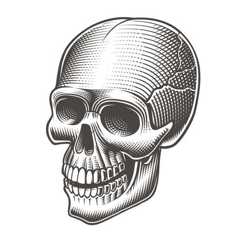 Vectorillustratie van een zwart-witte schedel